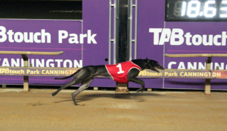 WA flavour on a big Group 1 night at The Meadows thumbnail