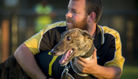 Greyhounds Australasia Website to be re-launched with Upgrades and Improvements thumbnail