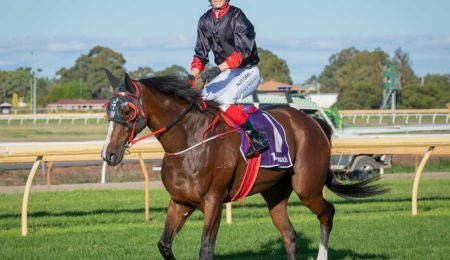 Melbourne Cup Campaign Dashed For Spiritual Warrior thumbnail