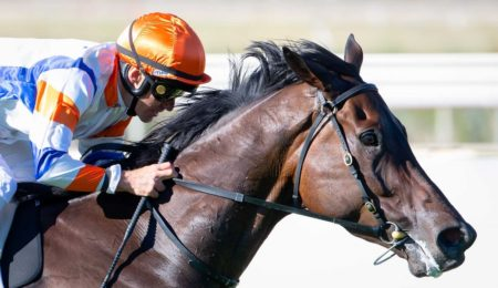 Winterbottom Stakes On Radar For Hey Doc thumbnail
