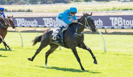 Parnham Filly To Fly thumbnail