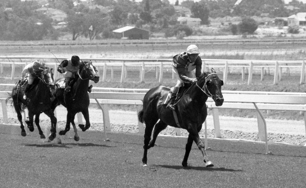 Thoroughbred Horse Nominee: Haulpak thumbnail
