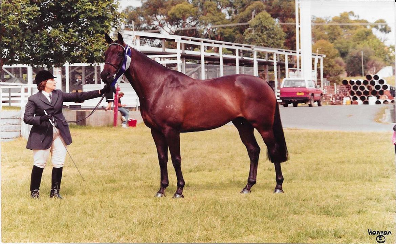 Millionaire-United-Horse-Breeders-resized-for-web