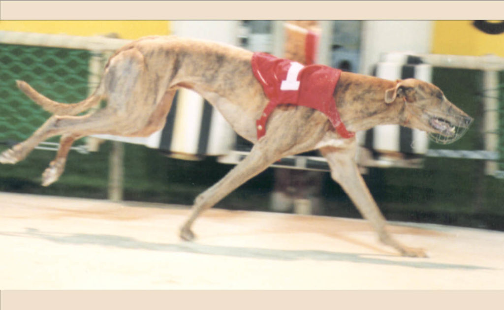 Greyhound Nominee: Paradise Street thumbnail