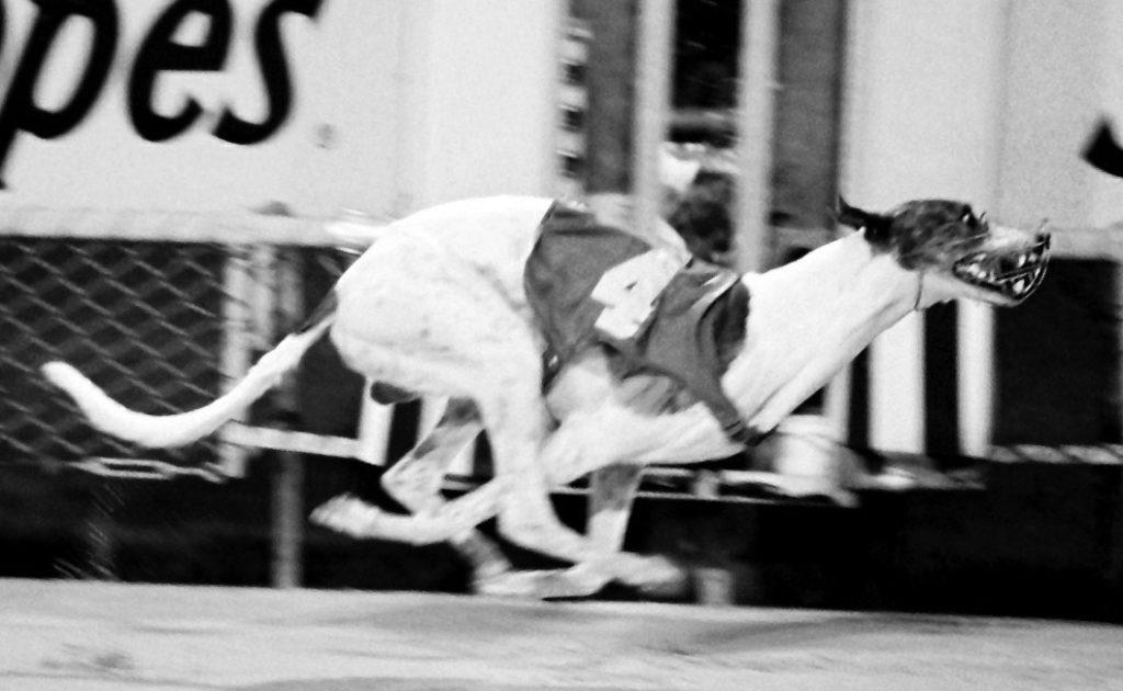 Greyhound Nominee: Reggemite thumbnail