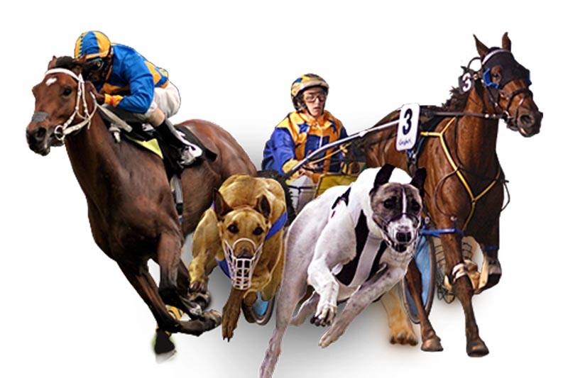 About - Racing Wagering WA