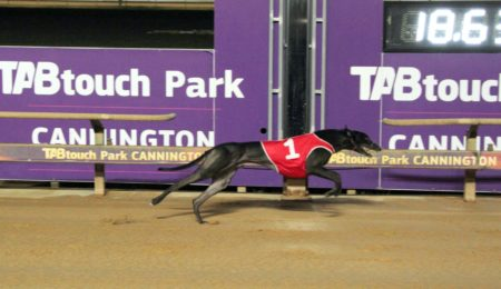 Buster Drawn to Play A Part in Mandurah Derby thumbnail