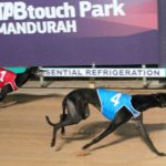 STAR BOOK BACKED IN MANDURAH OAKS FINAL thumbnail
