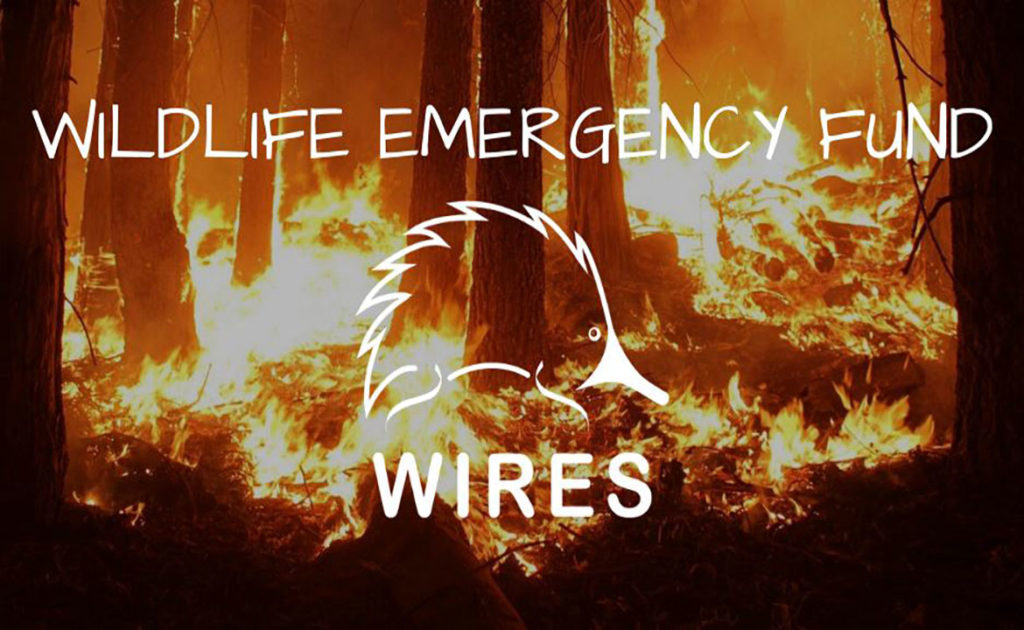Community TAB and WA Racing Industry fundraise for WIRES Emergency Fund thumbnail