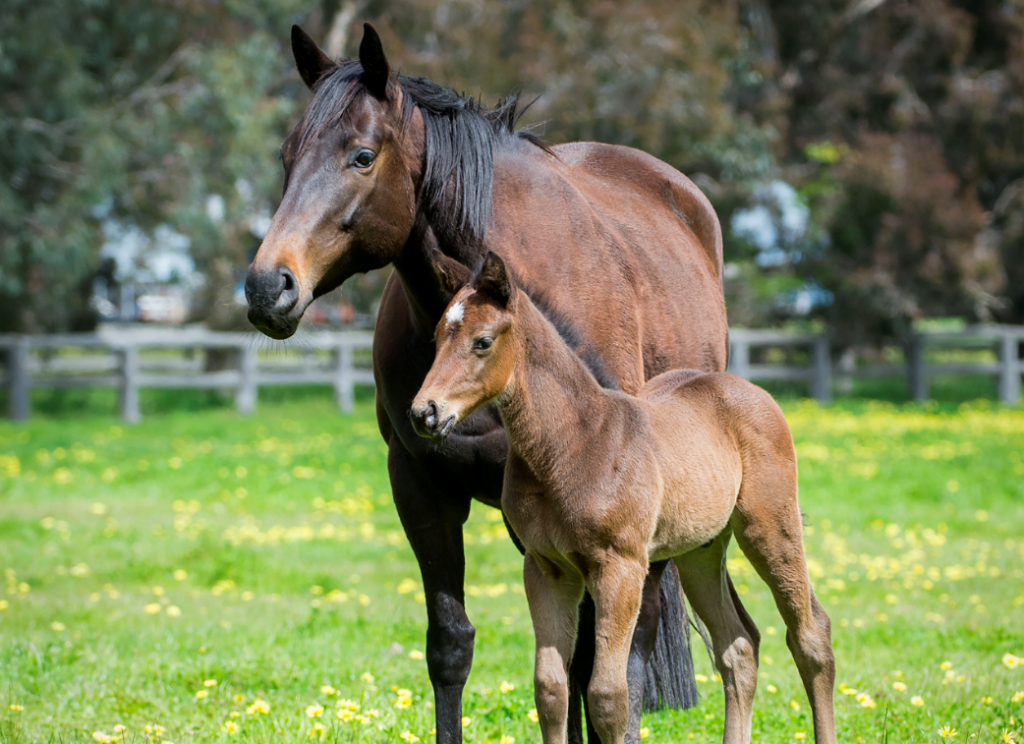 RWWA introduces Credit Scheme for WA Thoroughbred Breeding Industry thumbnail