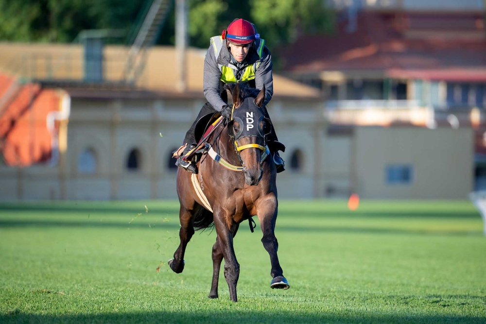 Parnham Holds Strong Hand In Northerly Stakes thumbnail