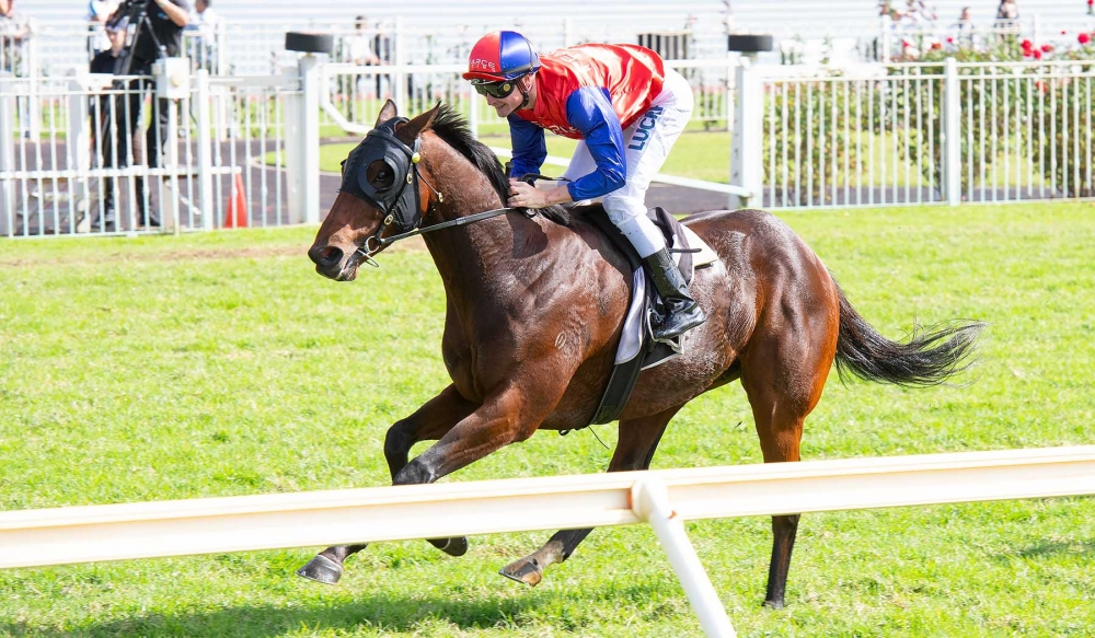 Money Maher Closes In On Elusive Win thumbnail