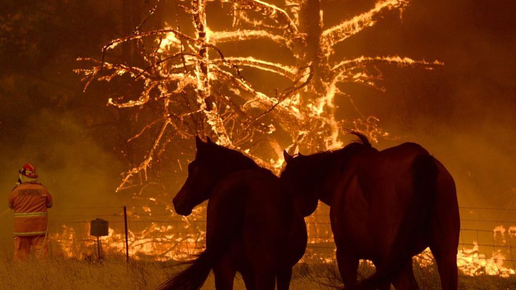Emergency Bushfire Evacuation Venues thumbnail