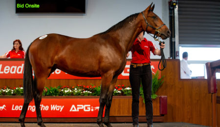 2021 Australian Pacing Gold Standardbred Yearling Sale comes to Perth thumbnail