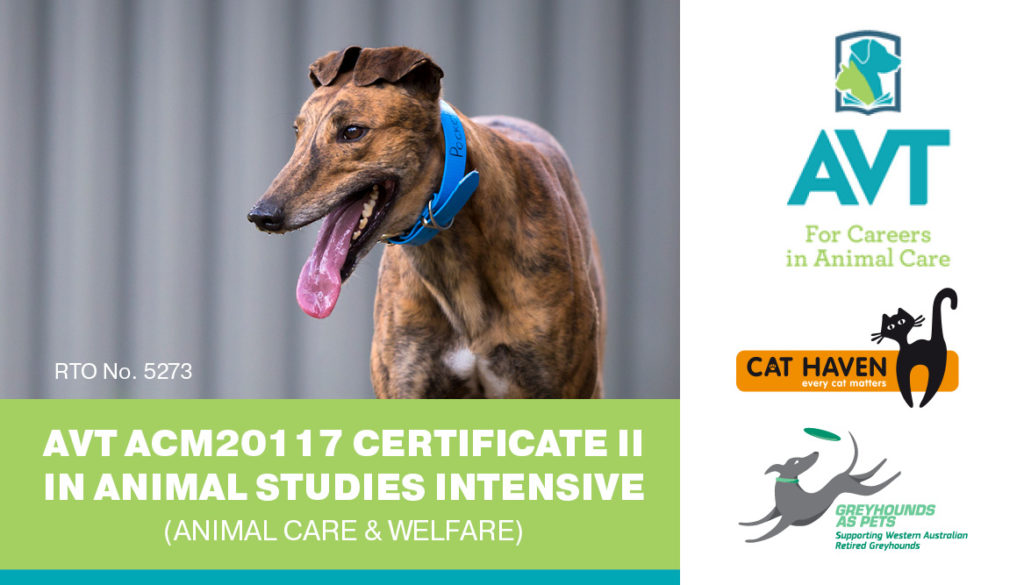 RWWA's Greyhound as Pets Partners with Applied Vocational Training thumbnail