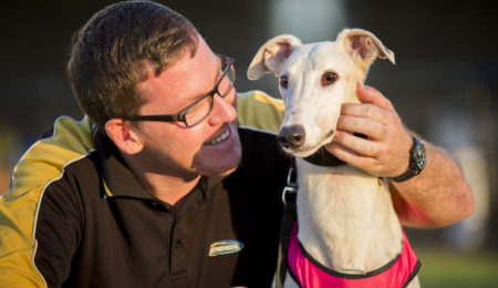 Greyhounds Australasia Website re-launched with Upgrades and Improvements thumbnail