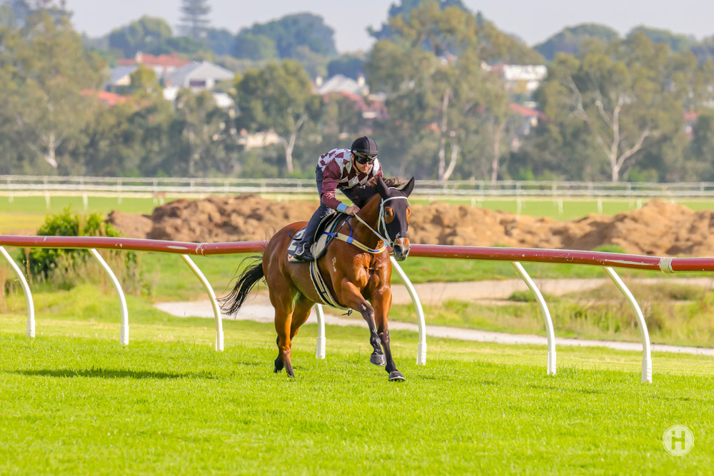 Condor Heroes To Target Beaufine Stakes thumbnail