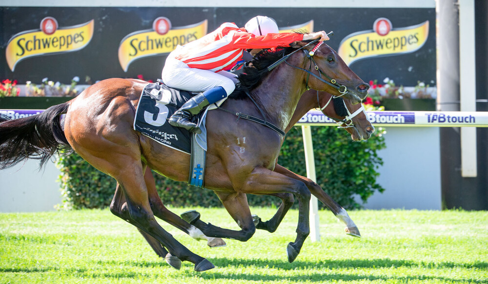 Featherweight To Deliver Sires Knockout For Morton thumbnail