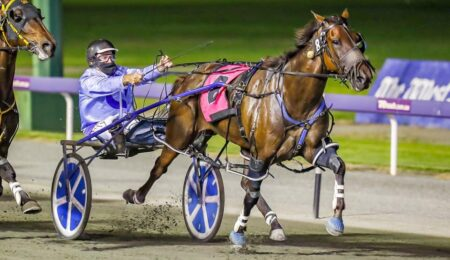 Minstrel NZ Returns to WA with a Bang thumbnail