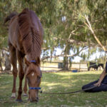 New rule for retirement and rehoming of racehorses thumbnail